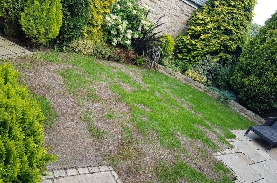 before-artificial-grass-12